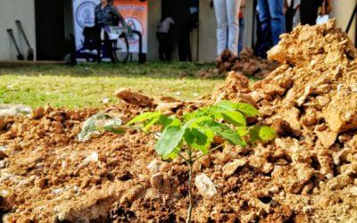 Arborización del Campus Universitario Arandu Poty